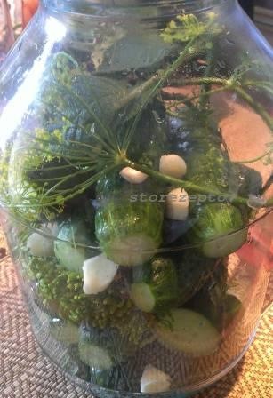 Слои зелени и огурцов перед засолкой