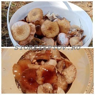 Маринованные быстро грибы опята без стерилизации: рецепт в банках